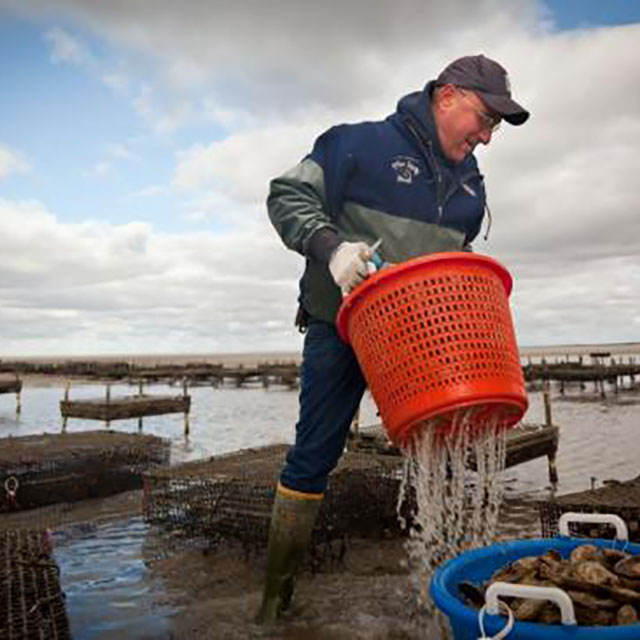 Forklift Catering - Boston - Food Source - East Dennis Oyster Farm