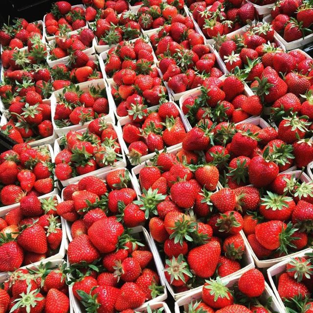 Forklift Catering - Boston - Food Source - Ward's Berry Farm
