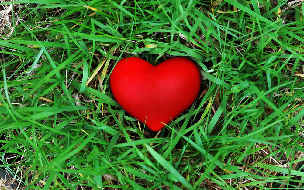 Red Heart in Grass